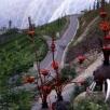 industrial flame plants eden (2)